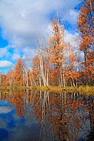 autumn wood on coast river