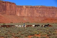 Navajo Cowboy, Mustang, Equus caballus, Monument Valley, Utah, USA, Northamerica, Cowboy and Mustang