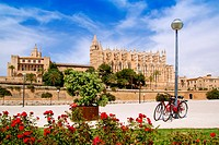 Majorca Cathedral and Almudaina from red flowers garden