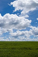 Clouds over a grassy field