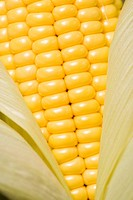Close_up of an ear of corn