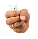 Close_up of a hand holding a white mouse