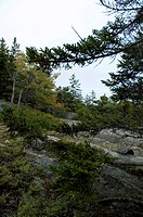 Gorham Mountain Trail, Acadia National Park, Maine
