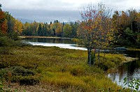 Autumn, Mount Desert Island, ME