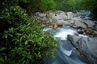 Stream & Spring Foliage, Great Smoky Mtns Nat Park, TN