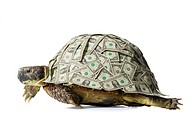 Turtle with US dollar bills on shell