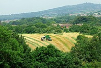 A tractor and a harvester gathering silage in a field with Mow Cop castle folly in the background