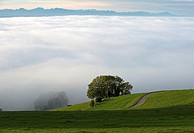 Sea of fog hanging over the Swiss Central Plateau with the Swiss alps behind, Switzerland