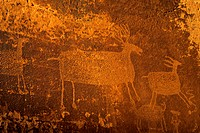 Deer and Elk Petroglyphs