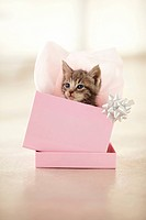 Adorable kitten in a pink gift box