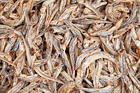 Whitebait _ anchovies