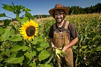 A young farmer checks his corn crop in fields near Yellow Point on Central Vancouver Island, British Columbia, Canada