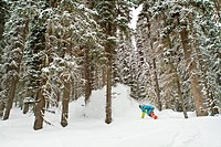 A male splitboarder rides through the trees at Icefall Lodge, Canadian Rockies, Golden, BC