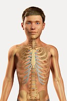 Digital illustration of a pre_adolescent male child with the bones of the skeleton system visible within the body.