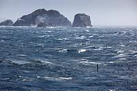 Albatros skims across stormy Drake Passage sea with rocky headlands, near Cape Horn, Cape Horn National Park, Magallanes y de la Antartica Chilena, Pa...