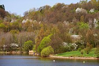 Blooming trees at Bostal Lake, Nohfelden, Nature reserve park Saar_Hunsrueck, Saarland, Germany, Europe
