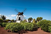 Windmill, Museo Molino, Antigua, Fuerteventura, Canary Islands, Spain