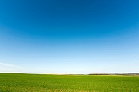 Green crops and cloudless sky