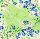 Bluebells and daisies watercolorsquare background