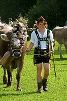 Ceremonial driving down of cattle from the mountain pastures into the valley in autumn in Bad Hindelang, Allgaeu, Bavaria, Germany