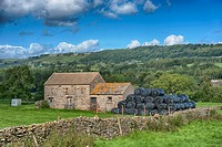 FHR-81235-03897-821 View of pasture drystone wall stone field barn and large black bales of silage Leyburn North Yorkshire England August