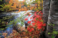 autumn color along a brook in Nova Scotia Canada