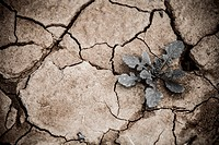 Cracked, dry soil, Barcelona, Spain