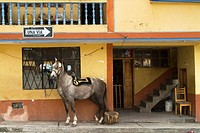 Ecuador, Salinas, horse in the main square