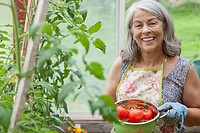 Senior woman with tomatoes from greenhouse garden.