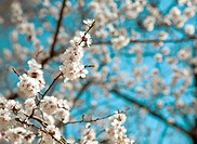 background of spring