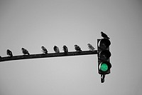 Semaphore with pigeons