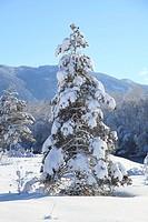 eingeschneiter Baum