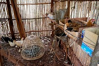 CAMBODIA. Projects of Caritas Cambodia, funded by SCIAF. Puchrey Chang village, Puchrey commune. Beneficiary family with fish pond and chickens, Mr Se...