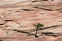 Lone Tree Growing in Rock Formation