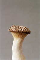 King eryngii mushroom