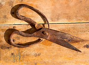 Antique sheep wool shears scissors vintage rusted on retro wood