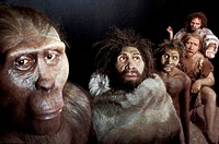 Anthropological models, group portrait. Reconstructions by Elisabeth Daynes of the Daynes Studio, Paris, France. From left to right: male Australopith...