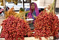 Red and yellow dates palm ; Botanical name Phoenix Sylvestris Roxb ; Family Arecaceae ; Hindi Khajur ; being sold on the streets of Bhuj ; kutch ; Guj...