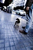 Dog and his master in the street, Valencia, Spain