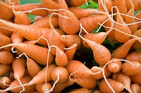 Carrot for sale at Nilgiris Nayagara a water fall , Ooty , Ootacamund , Tamil Nadu , India