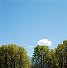 Lone Cloud Above Trees