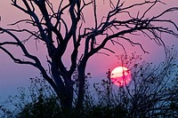 Sunset, Chobe National Park, Botswana, Africa