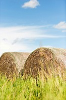 Summer scene with hay bales used for animal fodder