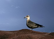 sea gull on fishing net