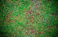 Grass Floor pattern background