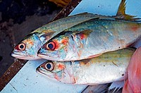 Bangra fish also called mackerel fish , India