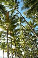 Low angle view of palm trees