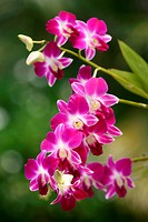Pink orchid in a garden