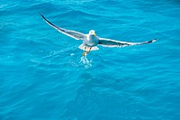 bird seagull on sea water in ocean