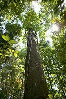 Low angle view of a tree bathed in sunbeams in a forest